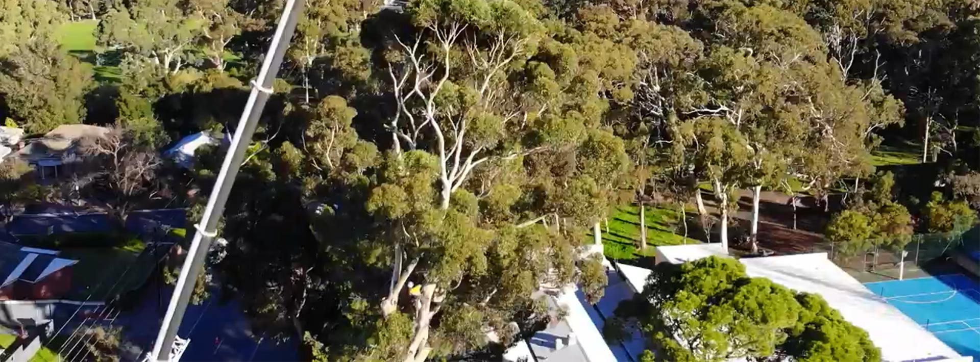 A crane lifting a large portion of a gum tree up over a school building
