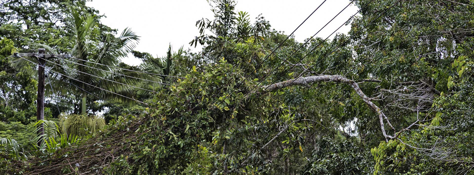 Tree fallen across power lines - emergency tree cutting services, Austral Trees