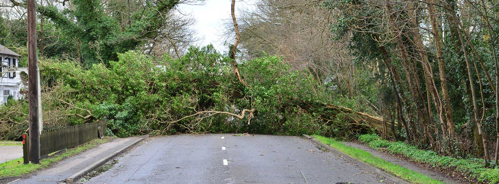 Tree fallen across road - emergency tree cutting services, Austral Trees